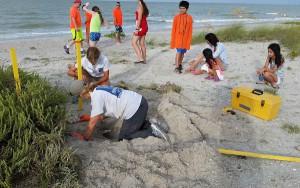 Sccf volunteers count sea turtle eggs