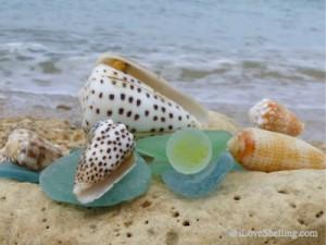 Seaglass marble with seashells coming beach Okinawa japan