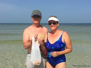 Shawn and Dawn Jax find shells and sand dollars