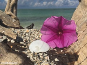 Signs of paradise. Seashells, flowers and turquoise water