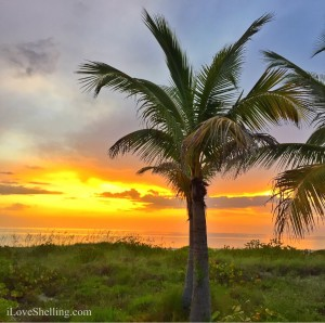 Sunset palm trees on captiva