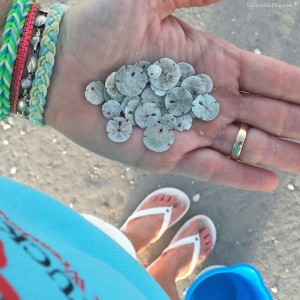 Tiny baby sand dollars found on Sanibel