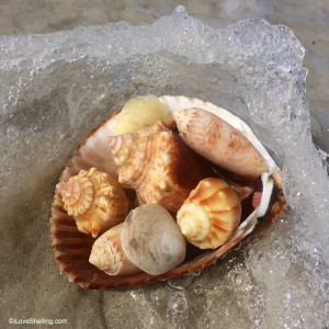 Aug 20, 2015 Seashells in shell with wave