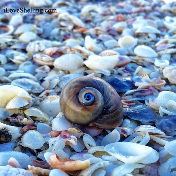 Paul Newman's Shark Eye at Bowman's Beach