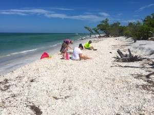 Cayo Costa shelling and beach combing