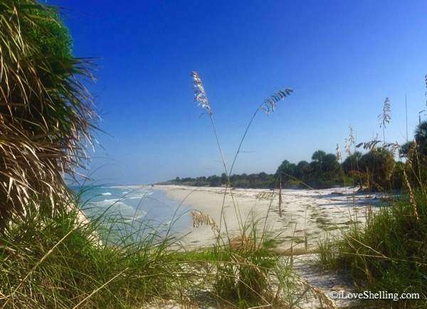 Egmont Key Island Beach Florida