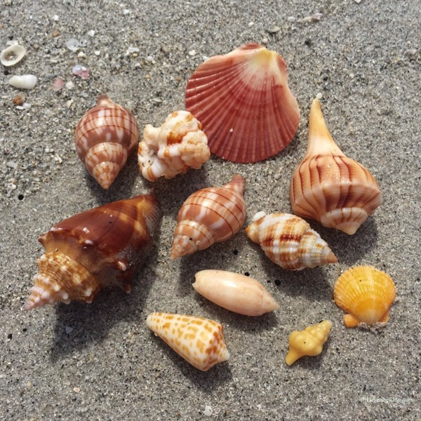 Beachcombing shells at Bowmans Beach