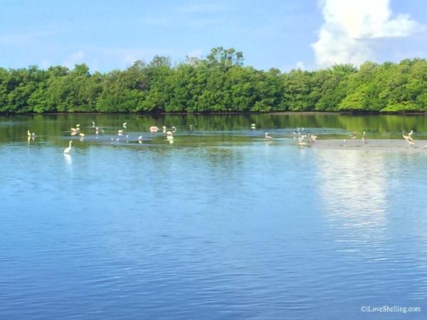 Estero beautiful birding boat ride