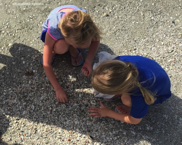 Fun collecting mini shells on Sanibel Florida