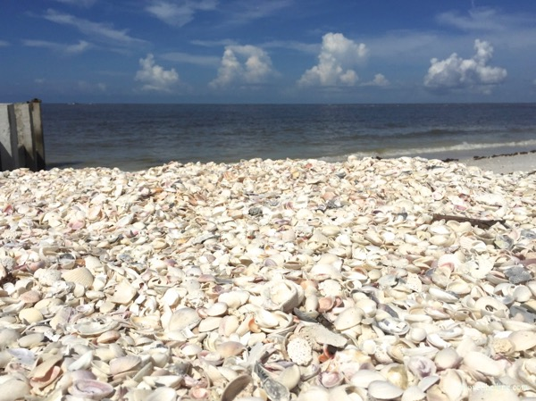 beach combers dream of a mound of shells