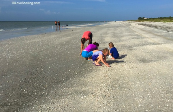 beach combing Sanibel