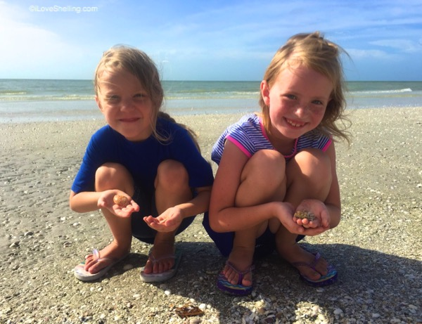kids finding Sanibel sea shells