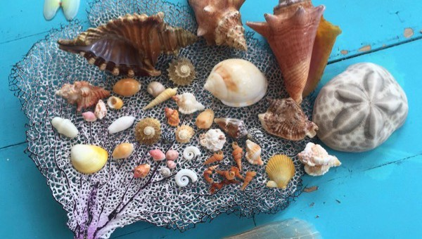 Abacos Bahamas seashells, sea fan, sea biscuit