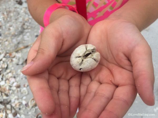 Heart Urchin beach treasure