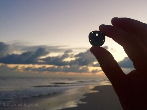 Ray's sand dollar in the sky
