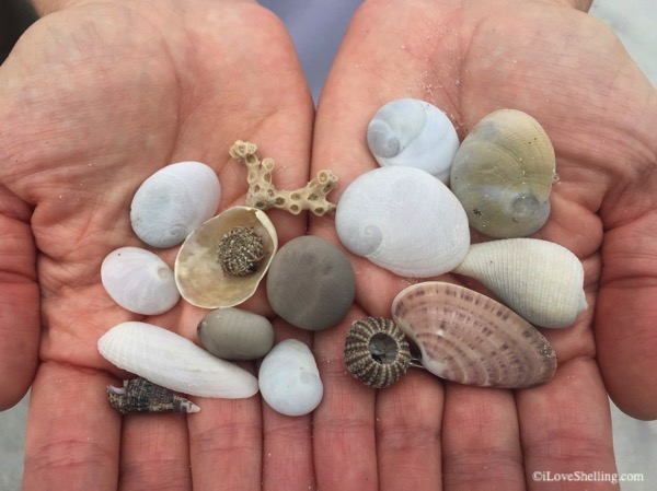 Several shells and Bunches of beach bling