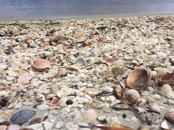 dream beach covered in seashells