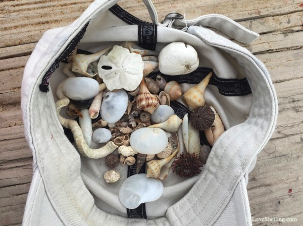 hat filled with seashells