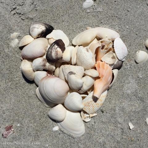 i heart shells beach art