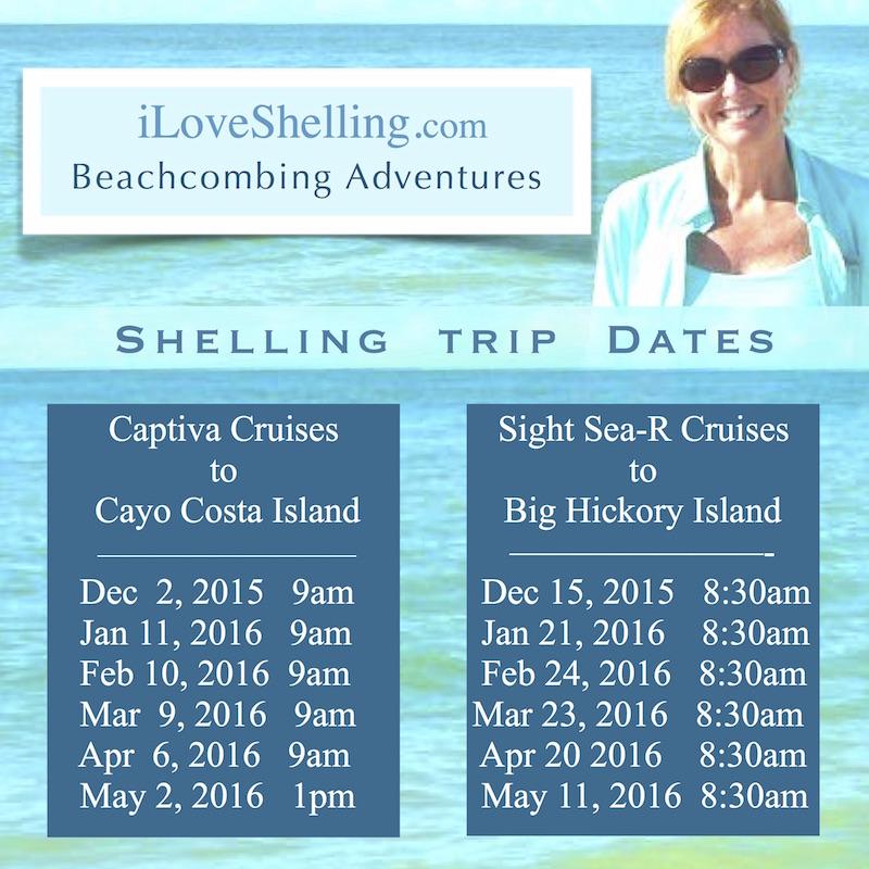 2016 beach combing tour trips blog
