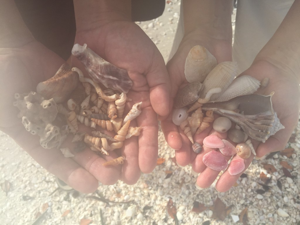 shells from Big Hickory Island