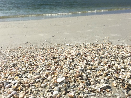 Shells on the beach Cayo Costa Florida