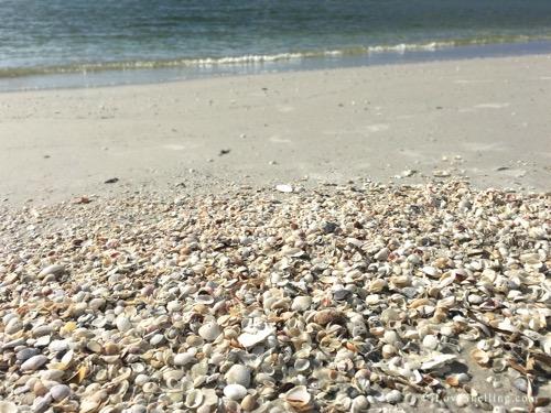 Shells on the beach Cayo Costa Florida