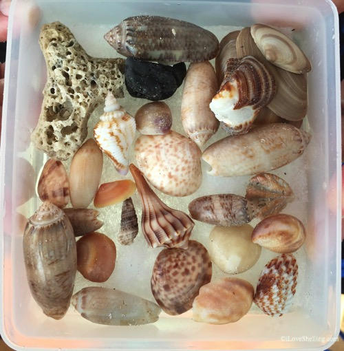 collection of seashells and beach bling