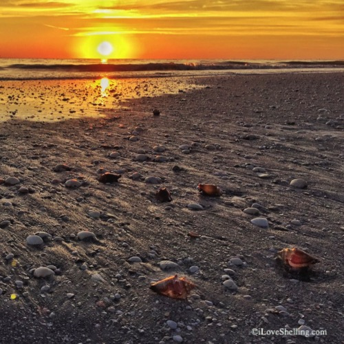 sunset shell wash from receding tide-1