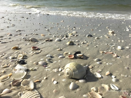 Florida beach with shells