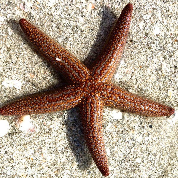 Wish upon a starfish on the beach
