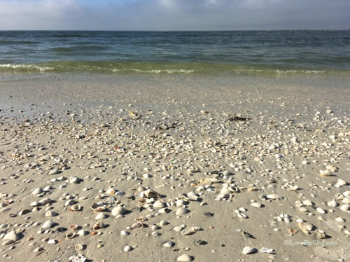 peaceful beach with seashells and calm water