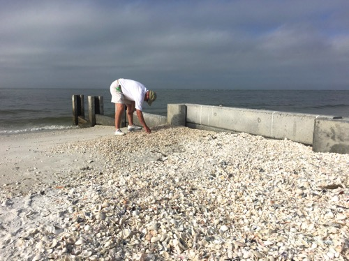picking up shells on the beach by jetty groin