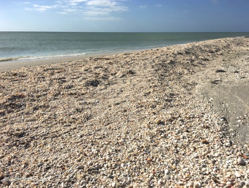 sanibel bowmans beach massive shell mound