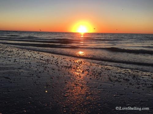 sunrise sanibel-1