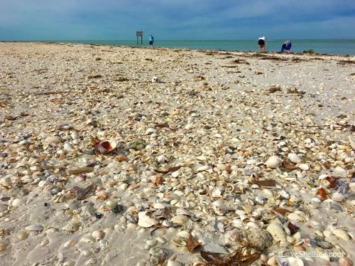 beach filled wth shells