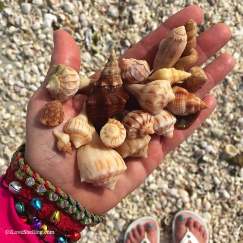 festive hand with sea shells