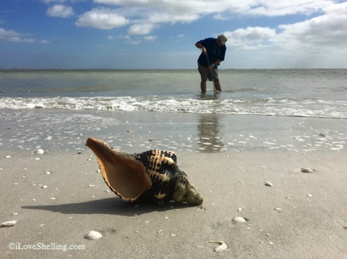 large empty horse conch