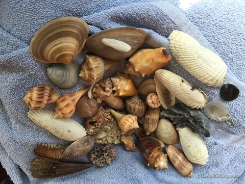 shell collection from trip