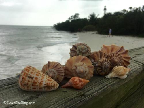 shells after storm on sanibel