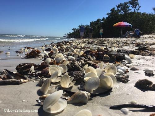 shells at sanibel lighthouse after storm