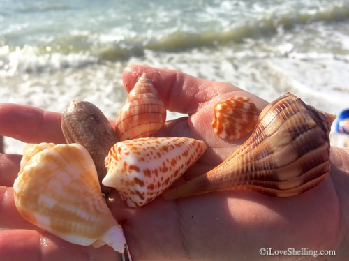 shells from blind pass