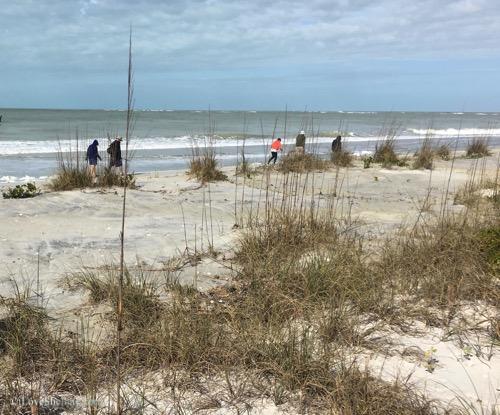 Beach Bucks To Big Whelks – Our Shelling Adventure