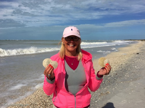 find sand dollars in Florida