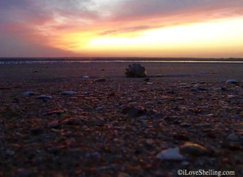 Crazy Carolina Beach Combing – Shelling Trip To Portsmouth Island, North Carolina
