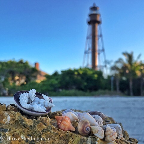 Sanibel Lighthouse seashells