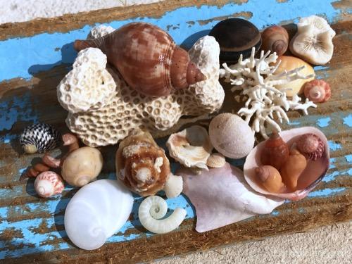 Beachcombing Eleuthera Island in the Bahamas