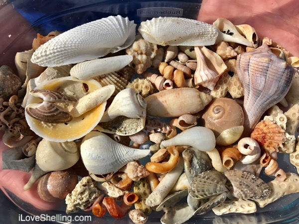 Warm, Colorful Shells on A Sunny Beach
