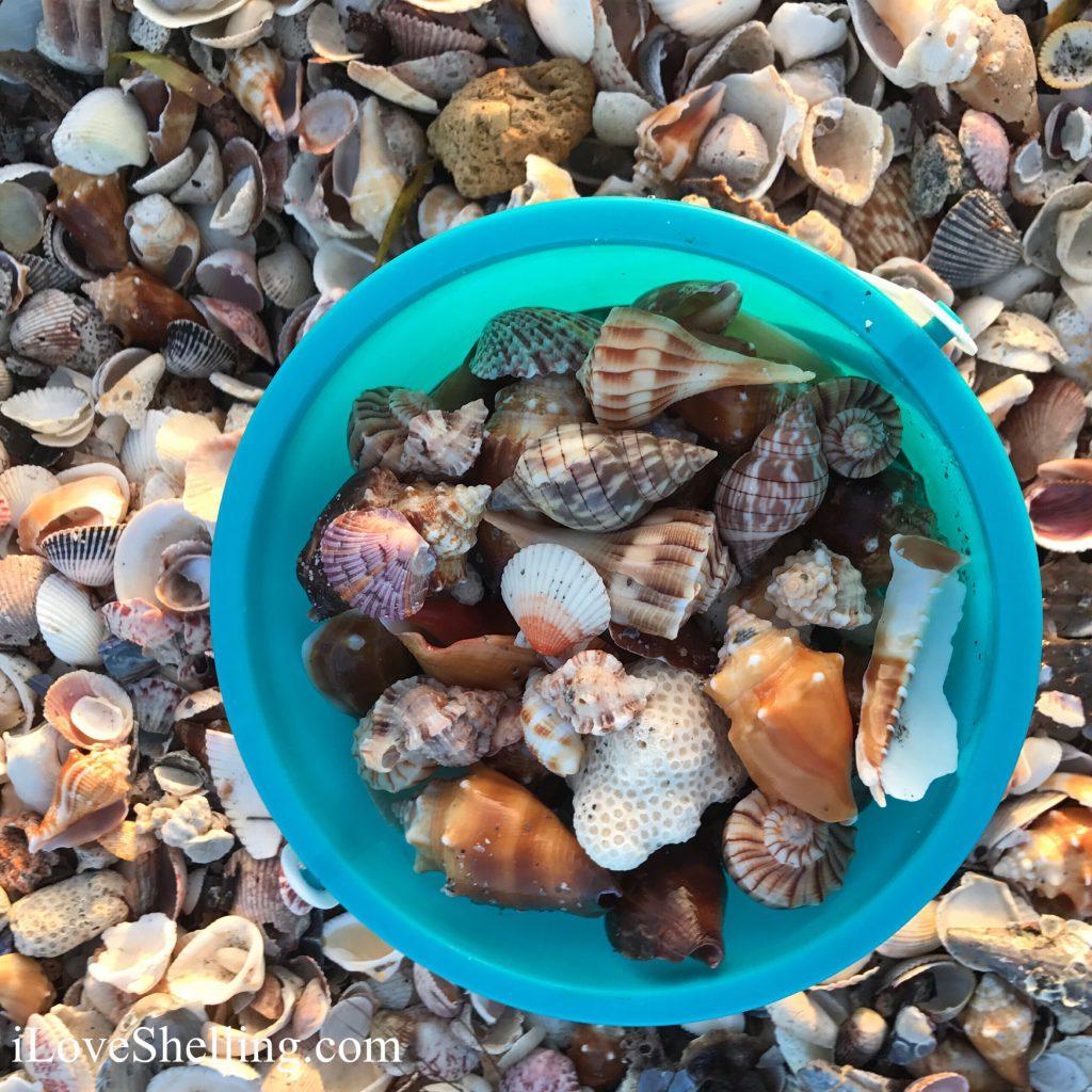 seashell turquoise shell bucket