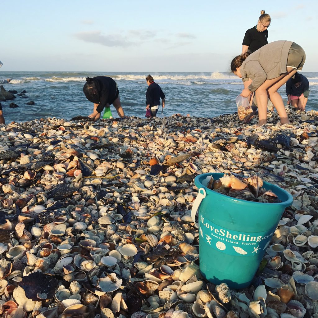 beach combers on pile of shell collecting seashells